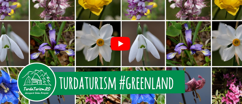 TurdaTurism #greenland 2019 (Video, Foto)